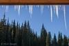 Jaws? (HarryMiller002) Tags: lolopass icicles trees treeline montana idaho