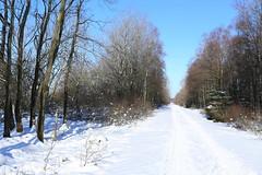 IMG_0238 (rudolf.brinkmoeller) Tags: eifel wandern natur eifelsteig hohesvenn