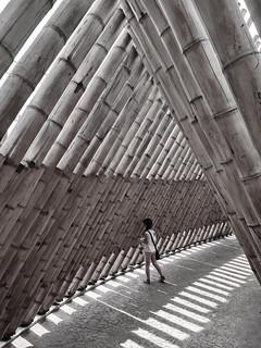 Sendero de bambú