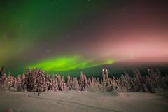 Fairbanks_AK (lindsay.lew) Tags: nature auroraborealis northernlights mothernature arctic nightphotography