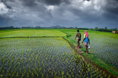 Untitled (Suresh V Raja) Tags: village agriculture cultivation cwc cwc590 sky clouds rainy green people nikon suresh chennai tamilnadu india sureshcprog sureshphotography d5300 landscape