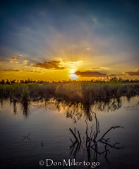 Sunset at the Watering Hole (DonMiller_ToGo) Tags: mavicpro reflection outdoors drone water sunset sunsets nature onawalk millerville goldenhour sunsetsniper lake sky sunsetmadness florida venice unitedstates us
