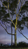 swing low ll (pbo31) Tags: bayarea california nikon d810 color february 2018 winter sanfrancisco city urban night dark black tree potrerohill wind windy earth swing purple panorama stitched panoramic large sky fog motionblur vertical