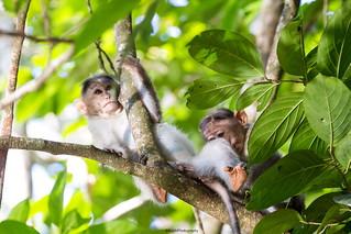 Monkeys (Explored)