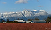 Pitt Meadows, BC (SonjaPetersonPh♡tography ♡ Away Mar. 21-25) Tags: pittmeadows pittpoulder bc britishcolumbia canada nikon nikond5300 landscape mountains sky snowcappedmountains mountainlandscape roads country blueberries blueberrybushes bushes colour