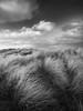 Dunes (Alistair Bennett) Tags: dunes seatonsluice whitleybay tynewear coast seascape grasses sunset mono gnd075me polariser sigma20mmƒ14dghsm art