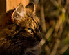 EOY.320.1_320 s.f_8.300.0 mm.4823.jpg (Jonitron) Tags: digitalphotography color tacomawa 2017 jonitron 28300mmf3556 nikon d610