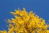 IMG_9725 (Matthew_Li) Tags: red leaf japan maple leaves