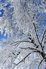 Treed (buffaloalice) Tags: minnesota snowstorm haycreek landscape creek cow barn red snowday bridges