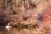 Boise Greenbelt (fandarwin) Tags: boise greenbelt winter2018 swan darwin fan fandarwin olympus omd em10