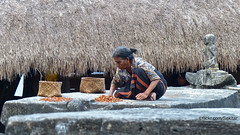 Drying betel nuts on the tombs of Kampung Tarung, Waikabubak, Sumba Barat (Sekitar) Tags: indonesia sumba barat daya ntt nusatenggaratimur kleinesundainseln lessersundaislands east drying betel nuts tombs kampung tarung waikabubak woman work village
