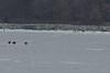 IMG_3117crop (neatnessdotcom) Tags: bald eagles hudson river bay winter birds prey peekskill ny westchester new york canon ef 100400mm f4556l is usm telephoto zoom lens eos rebel t2i 550d