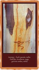bark1haiku (caralan393) Tags: haiku poetry