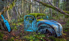 Bug (Paul Rioux) Tags: vessels car automobile transportation vw volkswagen bug beetle old decay decayed decaying delapidated relic abandoned forgotten discarded rust rusting moss prioux trees forest woods outdoors patina