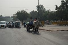 Delhi (Travis Estell) Tags: delhi india दिल्ली newdelhi in