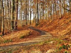 Sonnenwald (almresi1) Tags: forest wood wald nature weg way street strase kurve trees bäume baum sun sonne shadows germany remstal remshalden buoch grunbach landscape landschaft