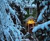 Snow Scene (pjpink) Tags: snow snowcovered snowy rvasnow rvasnow2017 northside rva richmond virginia waether trees limbs branches december 2017 winter pjpink 2catswithcameras