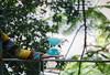 Malabares Mistura Beagá - MHAB - Wir Caetano - 15 01 2018 (27) (Wir Caetano / Dabliê Texto Imagem) Tags: palhaço malabares malabarismo