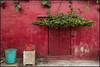 Façade rouge (PM Gaury) Tags: nikon nikond850 d850 inde couleur rajasthan pushkar rouge