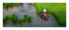 Life is better on the farm (Nithi clicks) Tags: green nature farmer