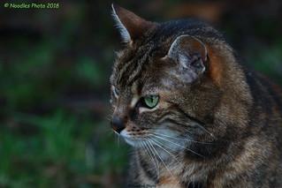 Streuner - stray cat