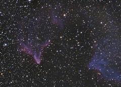 IC63 / IC59 Ghost Gamma cassiopeia (kenthelleland) Tags: ic63 ic59 cassiopeia astrophotography telescope nightsky universe gas hydrogen oxygen nightshot nightimage stars ghost celestron canon astrometrydotnet:id=nova2422804 astrometrydotnet:status=solved
