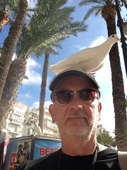 Selfie. Pulled a bird on holiday! (Bennydorm) Tags: benidorm face trees sky january sunglasses sunny town seaside resort europe espana spain valencia vacation holidays haha comical funny dove bird iphone5s man person people selfie