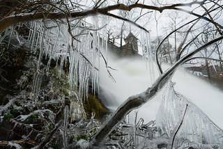 Frozen bushes.