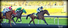 2018 California Oaks - Consolida (billypoonphotos) Tags: julian couton california oaks tinabud tapeta golden gate fields berkeley 2017 jockey horse racing thoroughbred dirt track photo picture photography photographer billypoon billypoonphotos nikon d5500 18140mm nikkor news stretch win finish synthetic race 18140 mm sign sport stadium building grass sky tree consolida