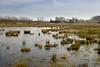 Frozen pond (Dannis van der Heiden) Tags: meadow wet area grass water ice sky tree field farm barn shed frosen cloud bird reed leusden schammer netherlands d750 nikond750 tamron2470mmf28 nature park dutchlandscape deschammer winter
