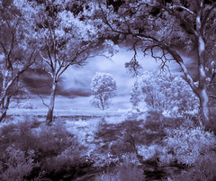 Bush (Matt OZW) Tags: axecreek infrared landscape blackwhite victoria australia forest