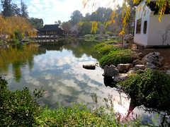 Clouds reflecting in the still water. (vickilw) Tags: thehuntington water garden reflection 362018 7daysofshooting week29 serene shootanythingsaturday 36118