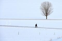 Winter Wonderland Field Walk (Eyes Open To Life) Tags: winter wintry snow weather couple people walk field path countryside rural tree baretree vermont