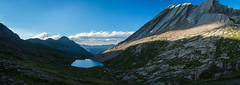 Un soir au lac Foréant (Maxime Bonzi) Tags: france queyras montagne haute flower hautesalpes nature fleur paysage alpes arvieux