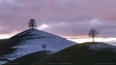 ~ t r e e s ~ (SteffPicture) Tags: tree visitswitzerland switzerland myswitzerland stephanreber steffpicture hügel sunset eveningambiance evening snow landschaft