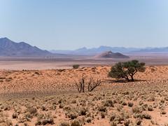 NamibRand desert (Melvinia_) Tags: olympusomdem1 namibia namibie desert désert namibrand naukluft namibrandfamilyhideout landscape sand africa afrique afriqueaustrale geoafrica
