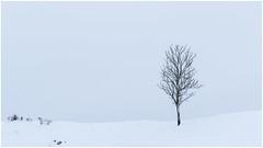 balades enneigées (giggi2ké) Tags: neige aubrac arbre gel froid minimaliste