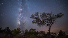 Old Tree (Bastian.K) Tags: sterne ibiza laowa15mm laowa 15mm 20 zerod fe venus optics balearen baleares milky way milkyway milchstrase stars twan