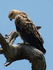 Chobe Nat Park, Botswana
