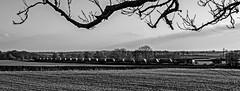 West Langton (Peter Leigh50) Tags: train railway gbrf shed class 66 trees field farmland fujifilm fuji xt10 blackandwhite monochrome mono bw black white