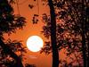 الغروب (suhaalnaqeeb54) Tags: غروبالشمس حديقةالازهر الغروب حديقةالازهرغروب برتقالي نيكون تصويري مصوره سهى cairo sunset orange