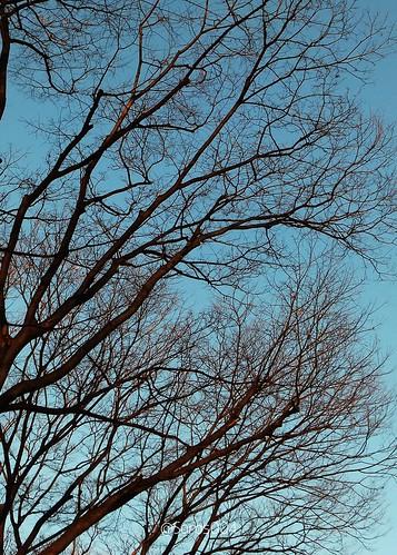 #Japan #Tokyo Arboles en invierno°° Trees in winter°° #日本 #東京 : 冬の木々