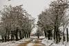 240A3992 (JoseFuko8) Tags: nieve fuentesauco zamora paisajes nevada invierno canon 7d mark ii pueblo campo