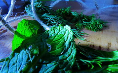 "Macro Mondays: ""My Favourite Novel (Fiction)"" (Hayseed52) Tags: ""myfavouritenovelfiction"" macromondays herbs mint dill romance story nature love plot"