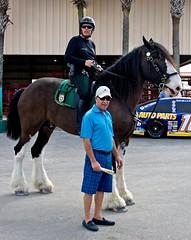 John and horse (LarryJay99 ) Tags: westpalmbeach florida southfloridafair canon60d animals horses john horse clydesdale sheriff uniform races saddles sunglasses glasses sunshadses shades helmets caps