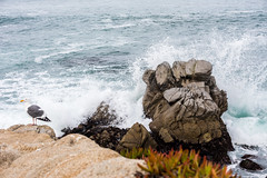 2018-Jan-California-911 (4x4Foto) Tags: 2018 bigsur california deetjensrestaurant emeraldbay january montereybay pacificcoasthighway pacificgrove pacificocean southlaketahoe flowers ocean plants rocks sunset sunshine surf surfing travel trees waves virginia unitedstates