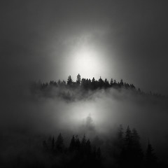 Cathedral (nlwirth) Tags: nlwirth yup redwoods humboldtcounty california trees mists rain clouds light blackandwhite