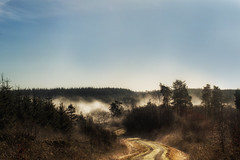 Misty Morning (Mark Wasteney) Tags: frosty frost frozen morning forest mist panoramic photostitch trees track northdevon devon westcountry uk