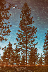 Roll With Me (Thomas Hawk) Tags: america california gyosemite2011 gyosemite2012 usa unitedstates unitedstatesofamerica yosemite yosemitenationalpark yosemitevalley refelction tree fav10