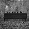promenade (l'imagerie poétique) Tags: limageriepoétique poeticimagery portfolio bronicasqa zenzanon150mmf35 mediumformatfilm kodaktmax400 selfdeveloped squareformat 6x6 vintagecamera crows visualpoetry
